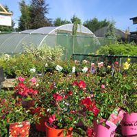 VAN DER WEL LTD. Cappagh Nurseries & Garden Centre